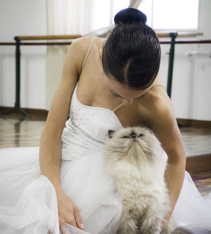 Los gatos y la danza oriental: 5 cosas que nos unen