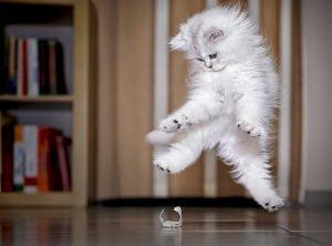 gatos_movimiento_baile