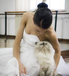 gatos_danza_oriental